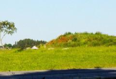 Flower Covered Hill