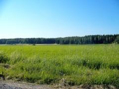 Hay Field In Morning