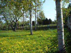 Gamla Gård in Spring