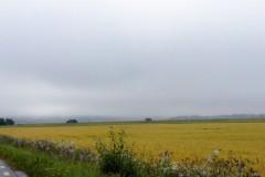 Fog & Gray Skies