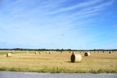 Autumn Hay Field