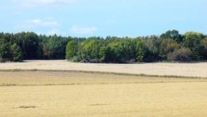 Autumn Fields In The Sun