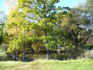 Pond at Venngarn