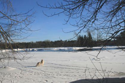 Loke Hunting Beavers? - February 2010