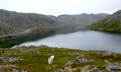 Loke & Arctic Lake