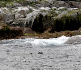Seal!