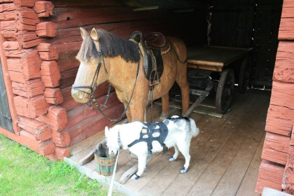 Loke did try to touch noses with the horse before looking to see what was in the bucket.