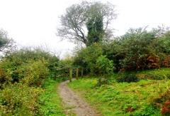 Footpath & Little Bridge