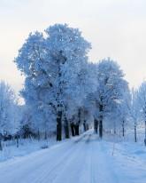 Tree-Lined Lane To Wik's Castle