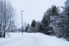 Snow Draped Path