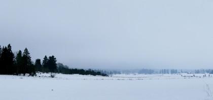 Trees, Snowy Fields & Mist