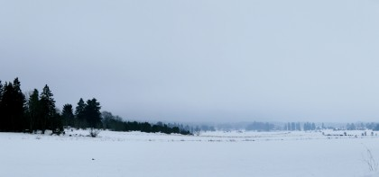 Trees, Snowy Fields & Mist