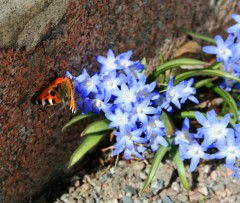 Flowers and Butterfly. Ah, Spring!