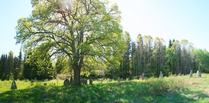 Tree Surrounded By Standing Stones