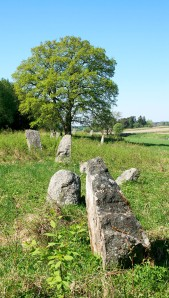 Stones & Tree