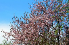 More Flowering Trees