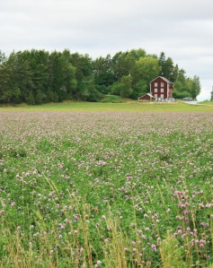 Clover Field From Different Angle
