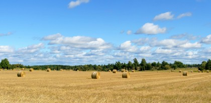 Golden hay fields say 'Autumn' like yellow and red leaves
