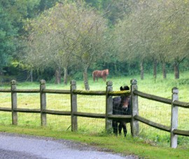 Ppft. Who needs guard dogs? This field had a guard pony!
