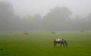 Misty Morning Animals