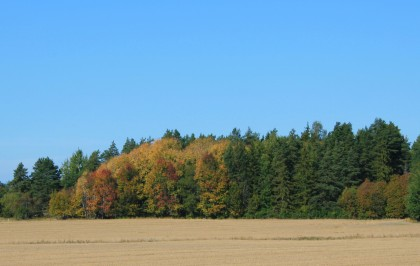 The 'Old Faithful' of Autumn Colors - Sept 14, 2014