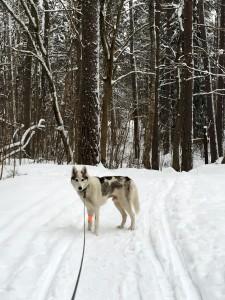 Loke's first walk after the hospital