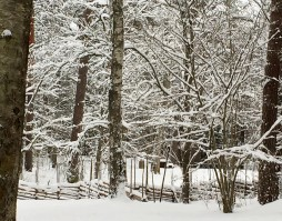 The deer were in the open on other side of the snow draped fence.