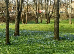 Random springtime photo