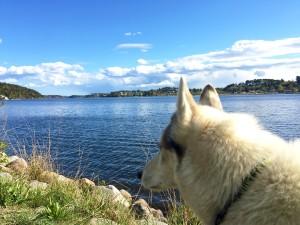 Loke by the Baltic