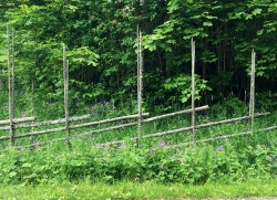 Liked the fence surrounded by green and hints of purple flowers.