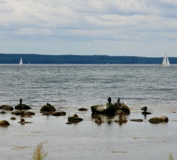 Sea birds and sail boats