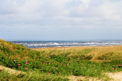 Sea, sun and flower covered dunes!