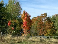 A bit blurry, but it's autumn colors!