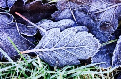 Unexpected frost