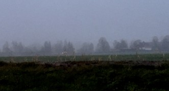 Grainy iPhone image of foggy field