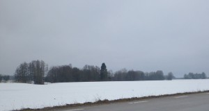 A gray day made lovely with snow on the fields!