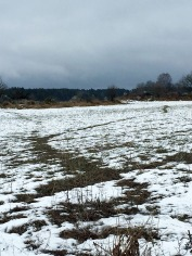 Disappearing snow and... a game trail?