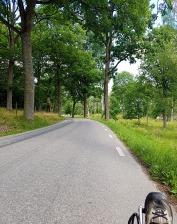 Shady lane toward Taxinge.