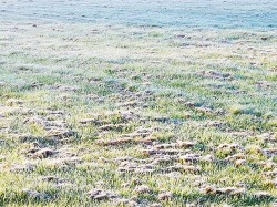 The first frost of Autumn 2016.
