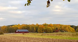 Such pretty hues distract from the muddy brown of a plowed field.