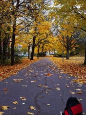 I love the blanket of leaves to the sides of the path too!