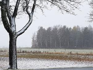 Snow! Lovin' the snow!