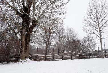 Lightning struck tree and traditional fencing in snow.