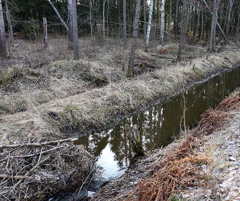 04-06 ba Possible Beaver Dam 2
