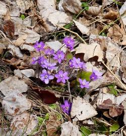 04-19 bb Spring Flowers 2