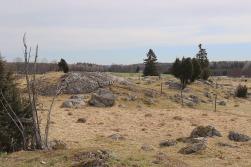 04-19 fa Pretty Pasture 2