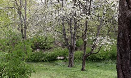 04-06 a Ah Spring